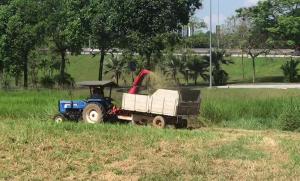 Jual pemotong rumput pakan ternak
